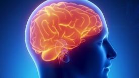 cerebro-275x155