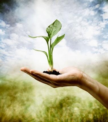 plantar o bem