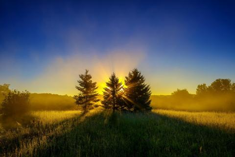 dawn-light-nature-sunlight-trees-2813944-480x320